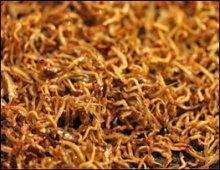 Chiri Myulchi Cooked